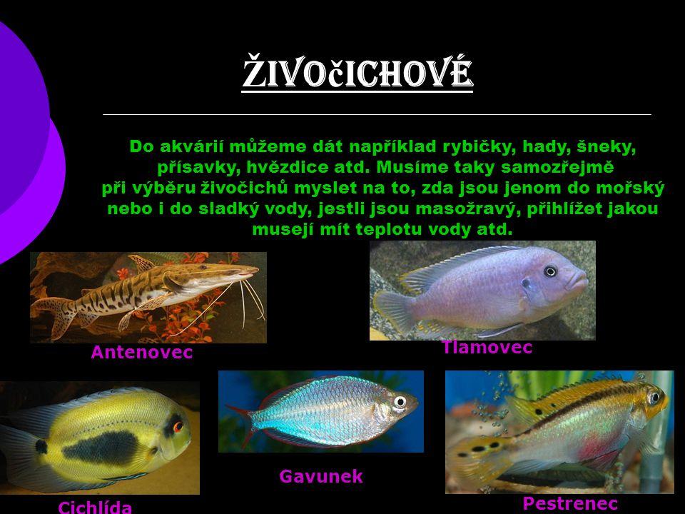 Ž ivo č ichové Do akvárií můžeme dát například rybičky, hady, šneky, přísavky, hvězdice atd. Musíme taky samozřejmě při výběru živočichů myslet na to,