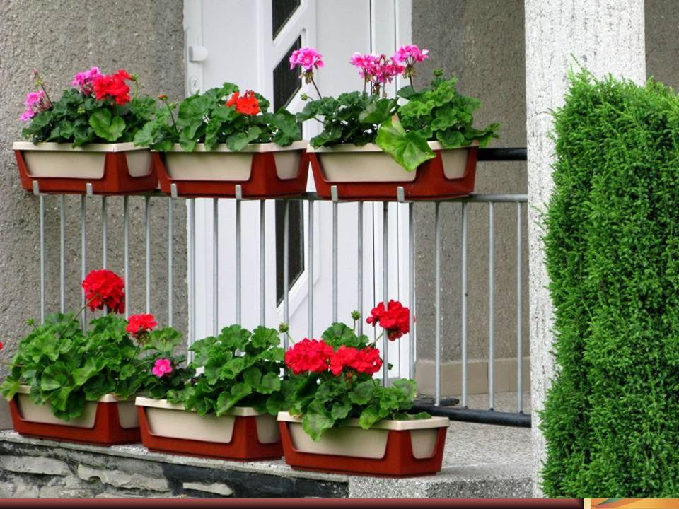 """Koncem jara v """"Lesní tůni , bude volba misky vůní, růže, šeřík všechny další budou vonět jak se patří."""