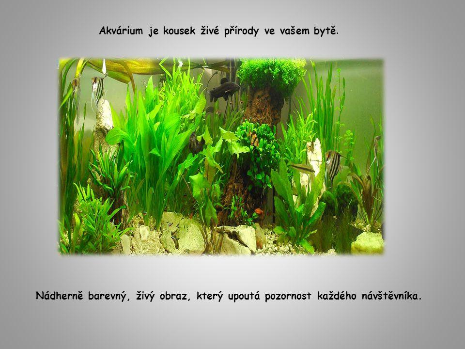 Akvárium je kousek živé přírody ve vašem bytě. Nádherně barevný, živý obraz, který upoutá pozornost každého návštěvníka.