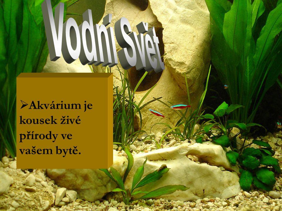  Akvárium je kousek živé přírody ve vašem bytě.