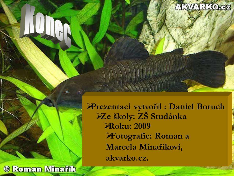  Prezentaci vytvořil : Daniel Boruch  Roku: 2009  Ze školy: ZŠ Studánka  Fotografie: Roman a Marcela Minaříkovi, akvarko.cz.