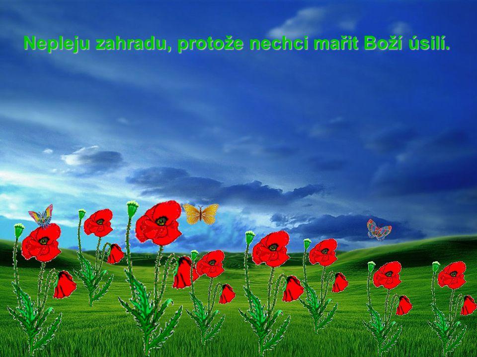 Nepleju zahradu, protože nechci mařit Boží úsilí. Nepleju zahradu, protože nechci mařit Boží úsilí.