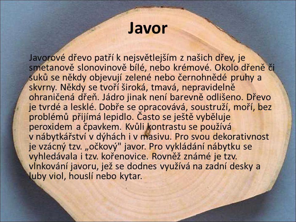 Javor Javorové dřevo patří k nejsvětlejším z našich dřev, je smetanově slonovinově bílé, nebo krémové. Okolo dřeně či suků se někdy objevují zelené ne