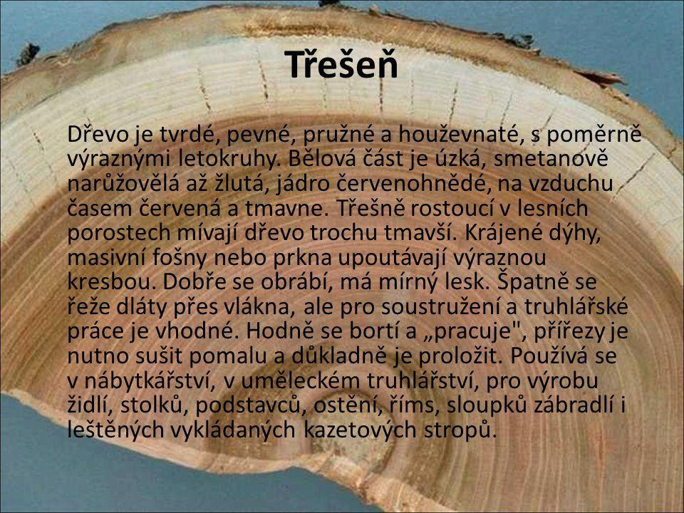 Třešeň Dřevo je tvrdé, pevné, pružné a houževnaté, s poměrně výraznými letokruhy. Bělová část je úzká, smetanově narůžovělá až žlutá, jádro červenohně