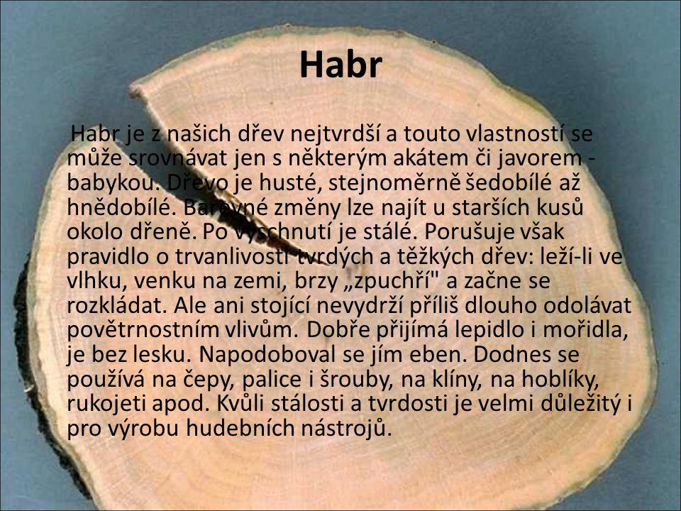Habr Habr je z našich dřev nejtvrdší a touto vlastností se může srovnávat jen s některým akátem či javorem - babykou. Dřevo je husté, stejnoměrně šedo