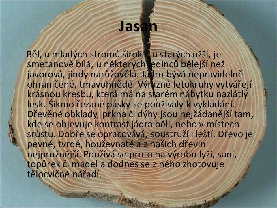 Jasan Běl, u mladých stromů široká, u starých užší, je smetanově bílá, u některých jedinců bělejší než javorová, jindy narůžovělá. Jádro bývá nepravid