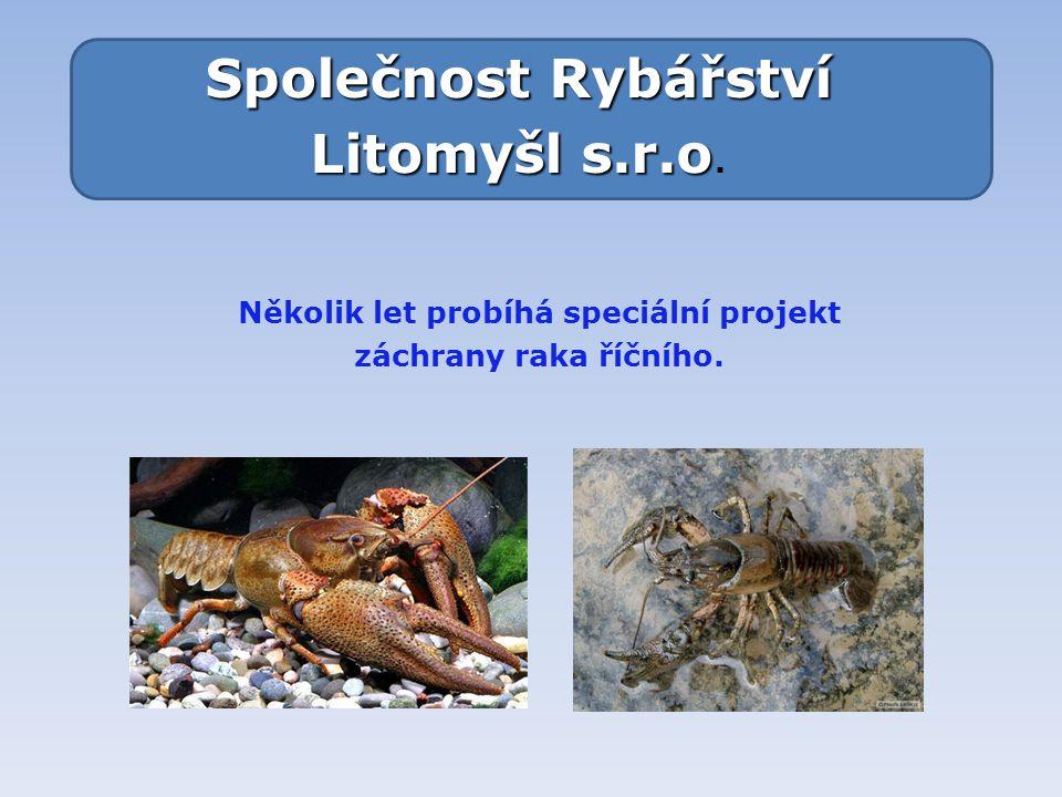 Společnost Rybářství Litomyšl s.r.o Litomyšl s.r.o. Několik let probíhá speciální projekt záchrany raka říčního.