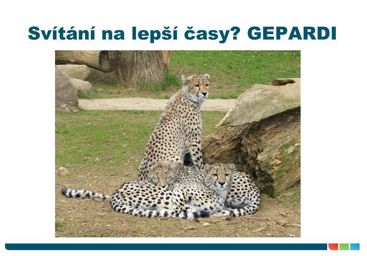 Generální plán rozvoje dopravní infrastruktury (GEPARDI) •detailnější strategický dokument z r.