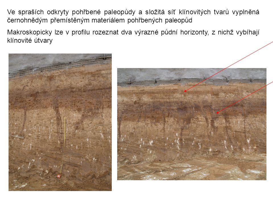 Ve spraších odkryty pohřbené paleopůdy a složitá síť klínovitých tvarů vyplněná černohnědým přemístěným materiálem pohřbených paleopůd Makroskopicky l