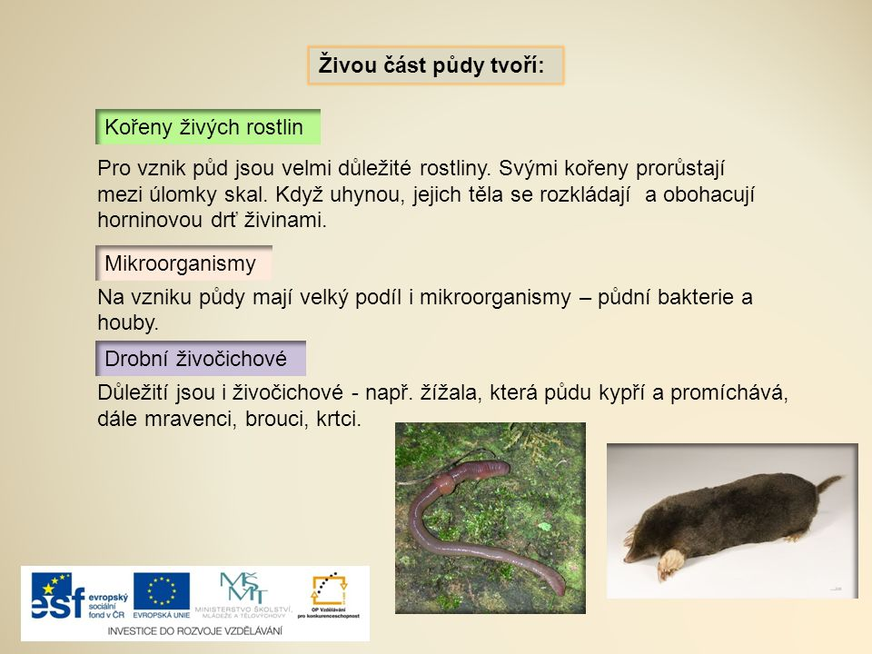 Živou část půdy tvoří: Kořeny živých rostlin Mikroorganismy Drobní živočichové Důležití jsou i živočichové - např. žížala, která půdu kypří a promíchá