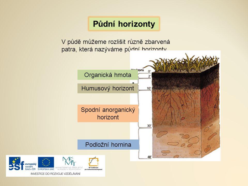 Půdní horizonty V půdě můžeme rozlišit různě zbarvená patra, která nazýváme půdní horizonty. Organická hmota Humusový horizont Spodní anorganický hori