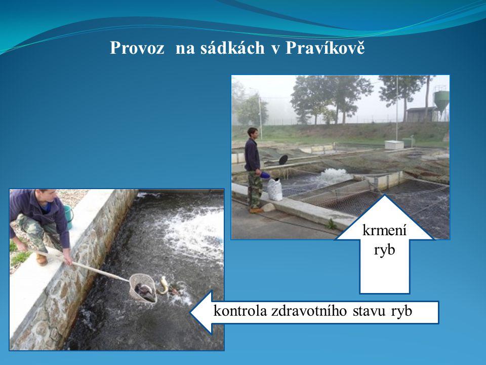 Provoz na sádkách v Pravíkově krmení ryb kontrola zdravotního stavu ryb