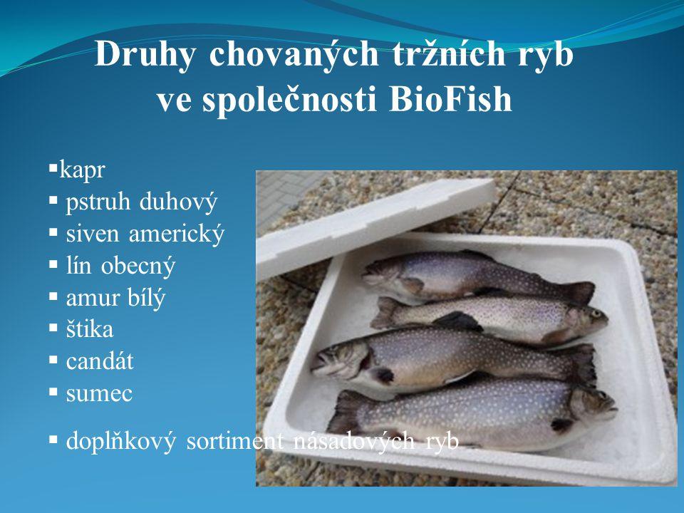  kapr  pstruh duhový  siven americký  lín obecný  amur bílý  štika  candát  sumec  doplňkový sortiment násadových ryb Druhy chovaných tržních ryb ve společnosti BioFish