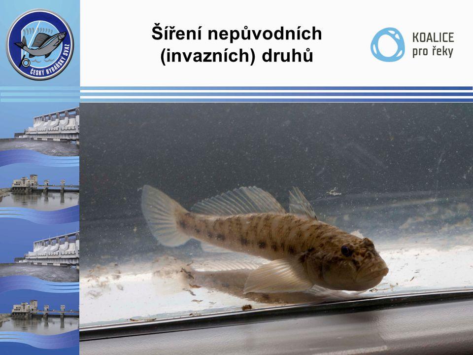 Šíření nepůvodních (invazních) druhů  Predace  Konkurence  Ohrožení chráněných druhů  Šíření invazních druhů lodní dopravou  Šíření hlaváčovitých