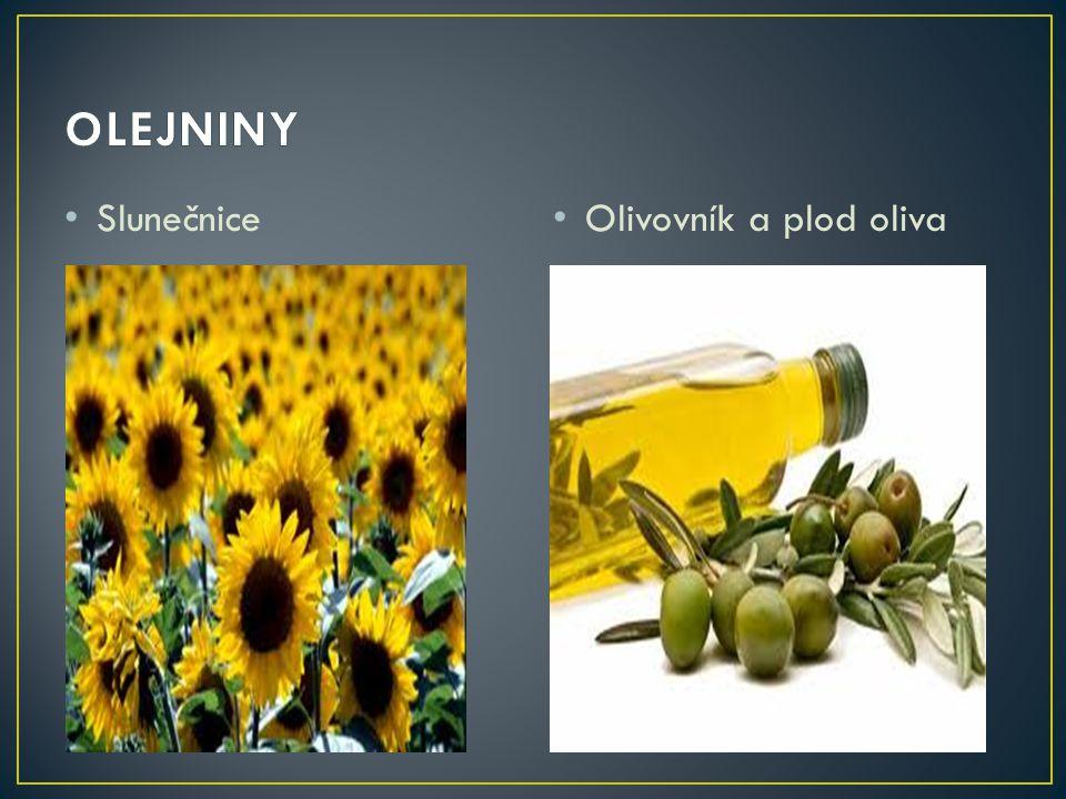 • Slunečnice • Olivovník a plod oliva