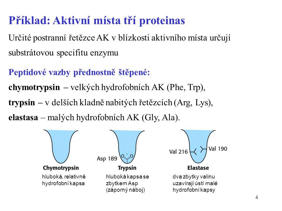 5 Katalytický mechanismus závisí na počtu substrátů •Monosubstrátové reakce S + E  { ES.......EP }  P + E •Dvousubstrátové reakce (častější) S A + S B  { ES AB.......EP AB }  P A + P B + E Sekvenční reakce: oba substráty se navážou na enzym a pak proběhne chemická přeměna a uvolnění produktů Ping-pongové reakce: typický pro aminotransferasy, jeden substrát se naváže, přemění a uvolní, pak totéž s druhým substrátem