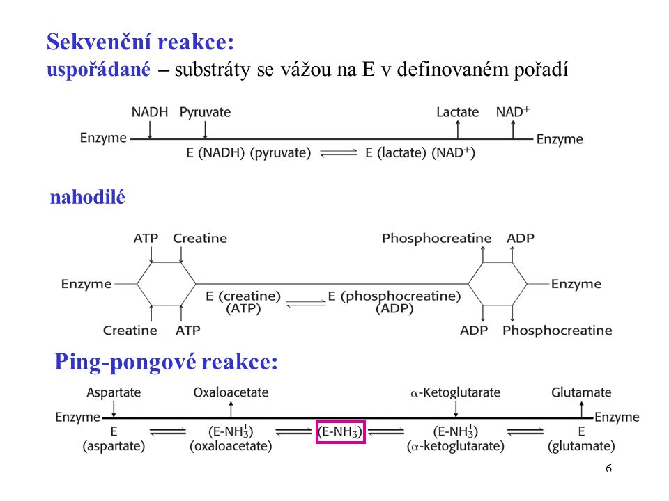 7 Katalytické skupiny •k realizaci chemické přeměny v aktivním místě jsou použity tzv.