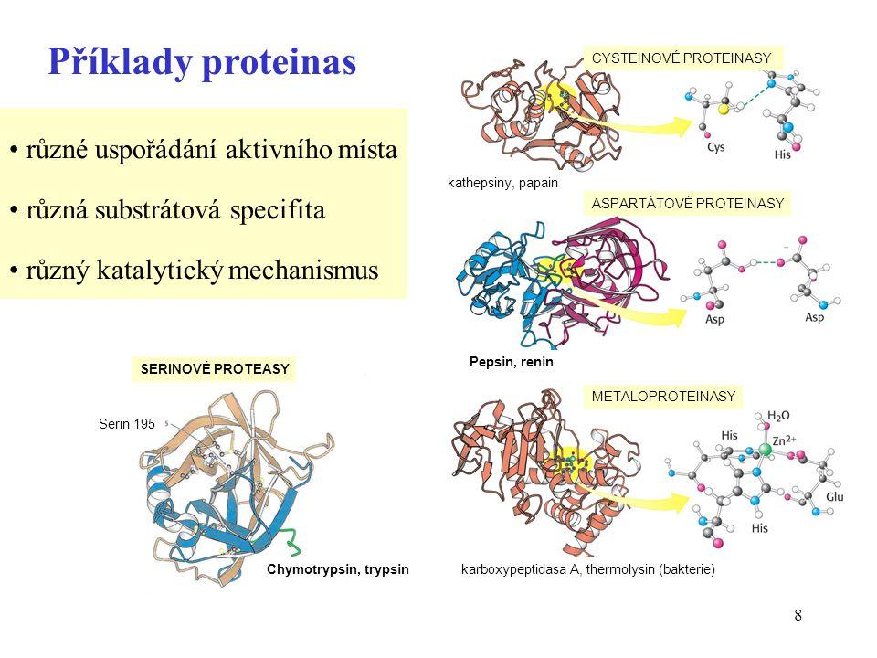 9 Příklad: aktivní místo chymotrypsinu Nukleofilní atak -OH serinu na karbonylový uhlík peptidové vazby  serinová proteasa 195 57 zjednodušeno
