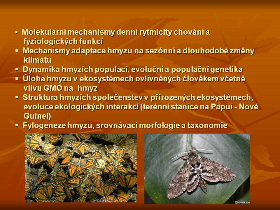  Molekulární mechanismy denní rytmicity chování a fyziologických funkcí fyziologických funkcí  Mechanismy adaptace hmyzu na sezónní a dlouhodobé změny klimatu klimatu  Dynamika hmyzích populací, evoluční a populační genetika  Úloha hmyzu v ekosystémech ovlivněných člověkem včetně vlivu GMO na hmyz vlivu GMO na hmyz  Struktura hmyzích společenstev v přirozených ekosystémech, evoluce ekologických interakcí (terénní stanice na Papui - Nové evoluce ekologických interakcí (terénní stanice na Papui - Nové Guinei) Guinei)  Fylogeneze hmyzu, srovnávací morfologie a taxonomie