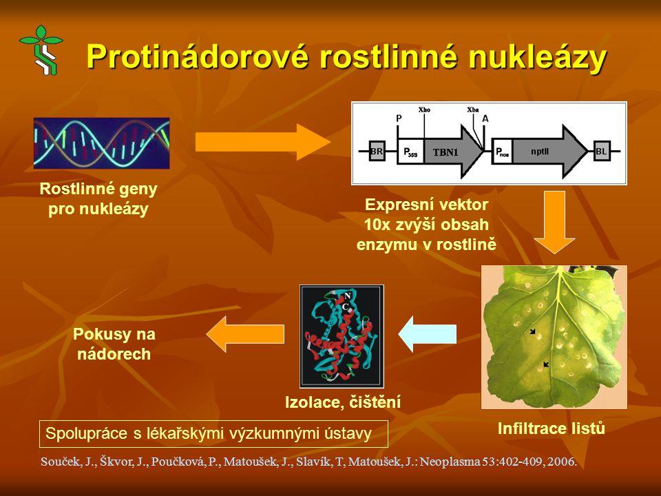 Protinádorové rostlinné nukleázy Souček, J., Škvor, J., Poučková, P., Matoušek, J., Slavík, T, Matoušek, J.: Neoplasma 53:402-409, 2006.
