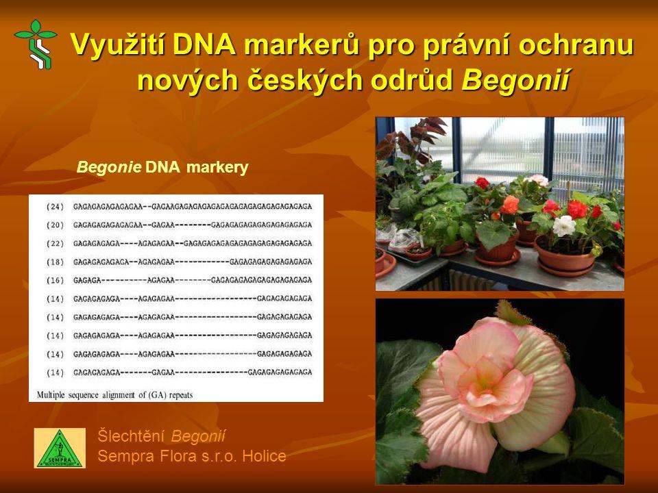 Využití DNA markerů pro právní ochranu nových českých odrůd Begonií Begonie DNA markery Šlechtění Begonií Sempra Flora s.r.o.