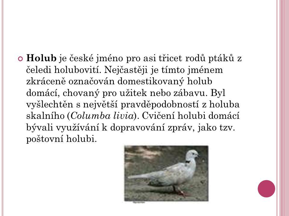 Holub je české jméno pro asi třicet rodů ptáků z čeledi holubovití.