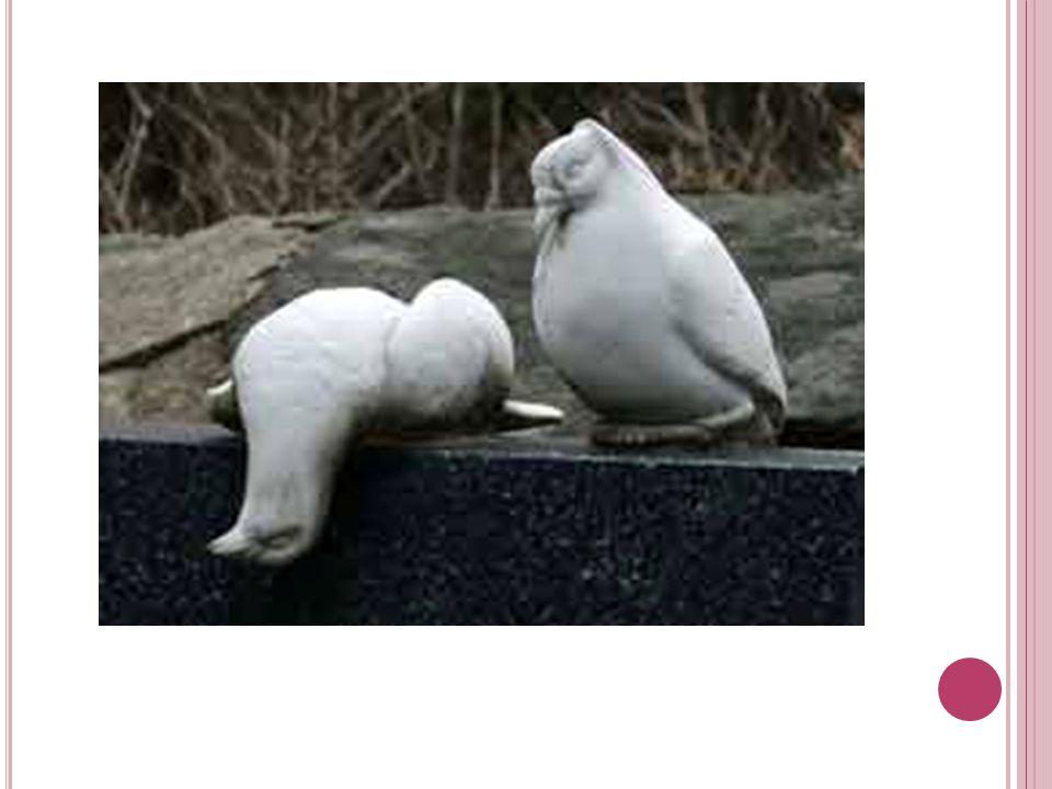 Jako exotičtí ptácí jsou někdy chováni holub chocholatý ( Geophaps lophotes ), holub zelenokřídlý (Chalcophaps indica) nebo holub krvavý ( Galicolumba luzonica ).