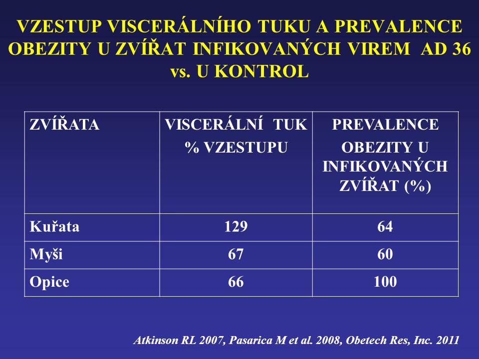 VZESTUP VISCERÁLNÍHO TUKU A PREVALENCE OBEZITY U ZVÍŘAT INFIKOVANÝCH VIREM AD 36 vs. U KONTROL ZVÍŘATAVISCERÁLNÍ TUK % VZESTUPU PREVALENCE OBEZITY U I