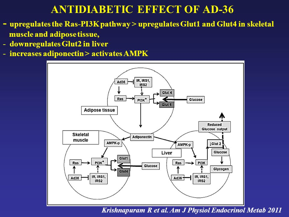 ANTIDIABETIC EFFECT OF AD-36 - upregulates the Ras-PI3K pathway > upregulates Glut1 and Glut4 in skeletal muscle and adipose tissue, - downregulates Glut2 in liver - increases adiponectin > activates AMPK Krishnapuram R et al.