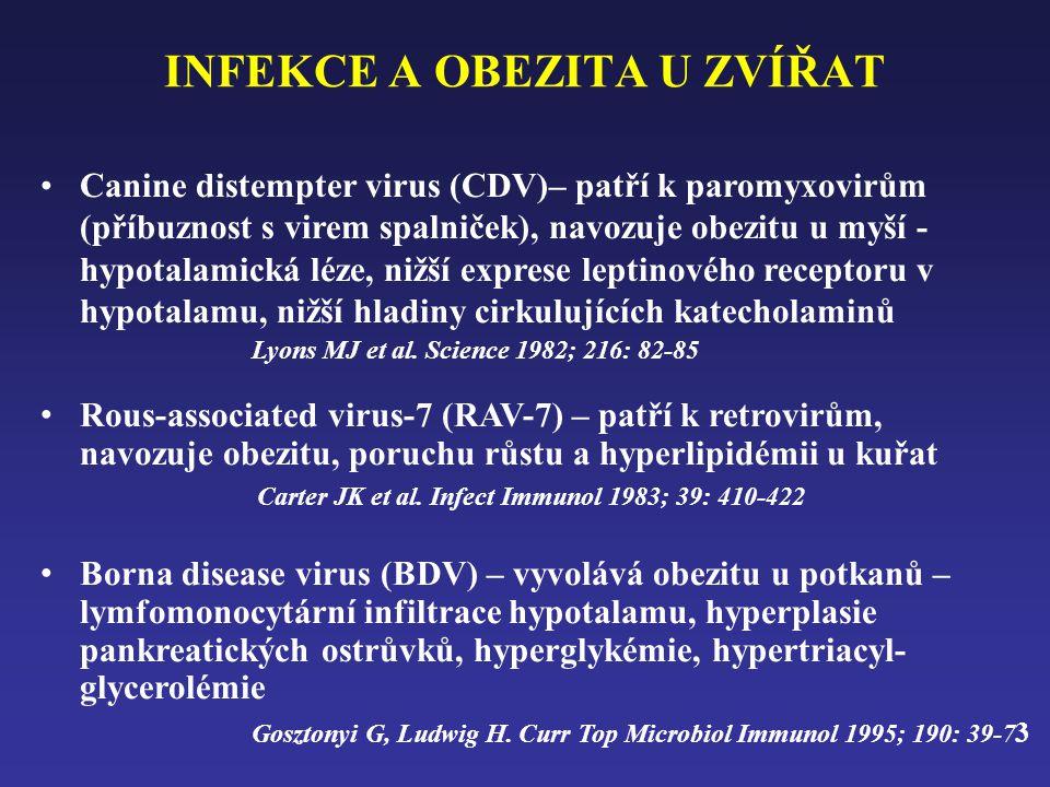 INFEKCE A OBEZITA U ZVÍŘAT •Canine distempter virus (CDV)– patří k paromyxovirům (příbuznost s virem spalniček), navozuje obezitu u myší - hypotalamická léze, nižší exprese leptinového receptoru v hypotalamu, nižší hladiny cirkulujících katecholaminů Lyons MJ et al.