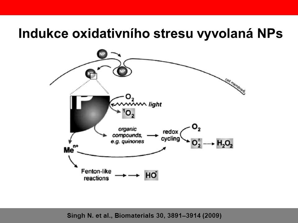 Indukce oxidativního stresu vyvolaná NPs Singh N. et al., Biomaterials 30, 3891–3914 (2009)