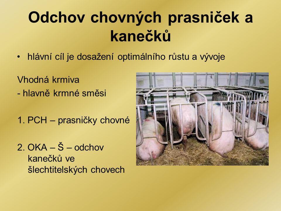 Odchov chovných prasniček a kanečků •hlávní cíl je dosažení optimálního růstu a vývoje Vhodná krmiva - hlavně krmné směsi 1. PCH – prasničky chovné 2.