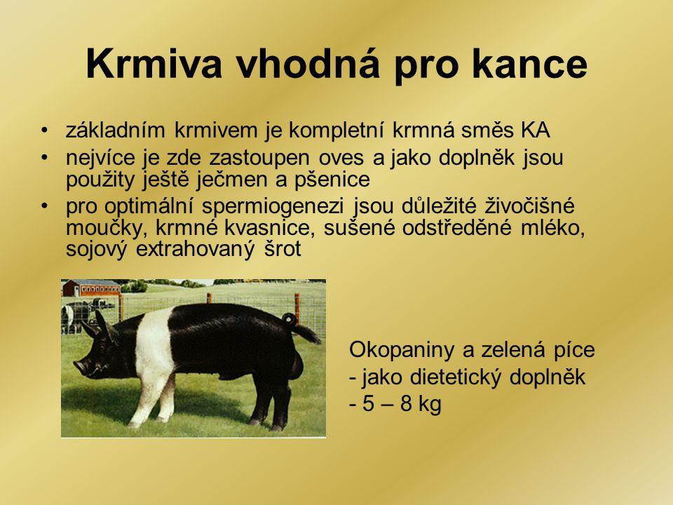 Krmiva vhodná pro kance •základním krmivem je kompletní krmná směs KA •nejvíce je zde zastoupen oves a jako doplněk jsou použity ještě ječmen a pšenic