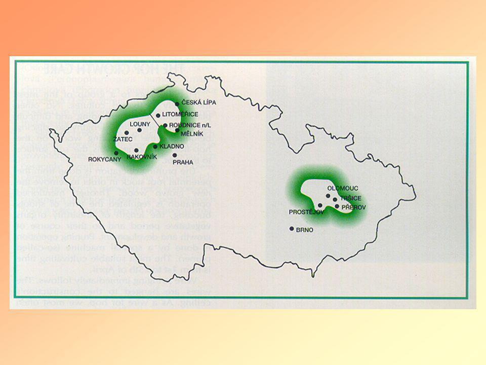 •Humulus lupulus - Chmel •z podhůří Kavkazu •Urticaceae – Cannabinaceae •Dvoudomý, samičí rostliny •Klony: Žatecký poloraný červeňák – ozdravený od virů a viroidů •Hybridy – po r.1994 z ozdravené meristemové sadby