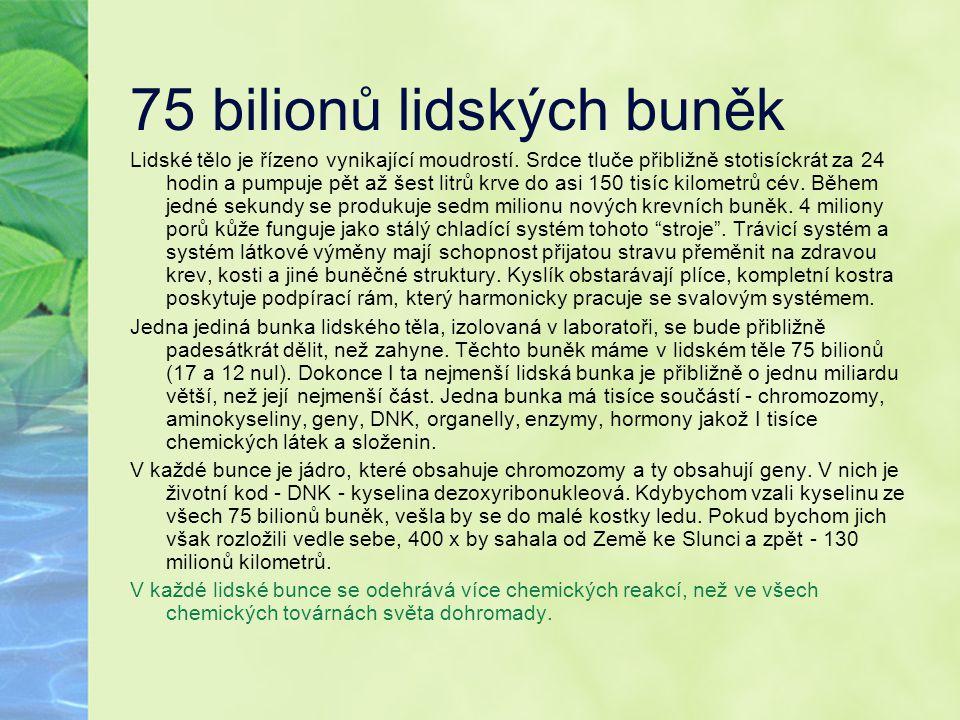 75 bilionů lidských buněk Lidské tělo je řízeno vynikající moudrostí. Srdce tluče přibližně stotisíckrát za 24 hodin a pumpuje pět až šest litrů krve