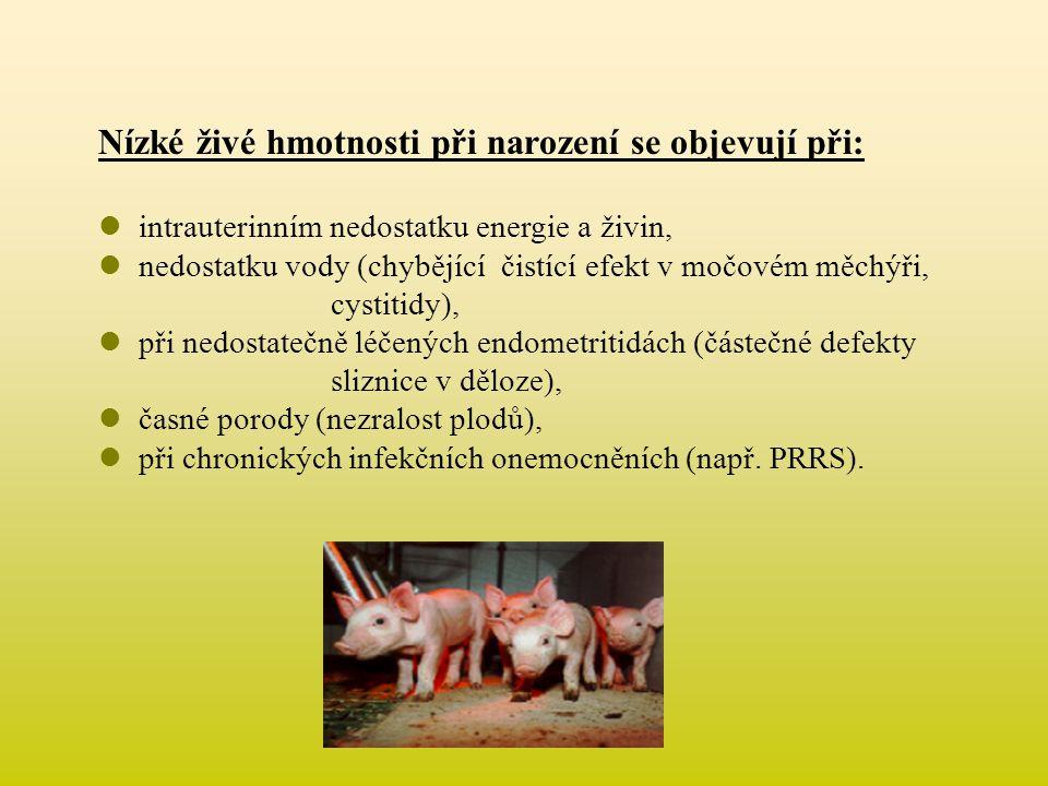 Nízké živé hmotnosti při narození se objevují při:  intrauterinním nedostatku energie a živin,  nedostatku vody (chybějící čistící efekt v močovém m