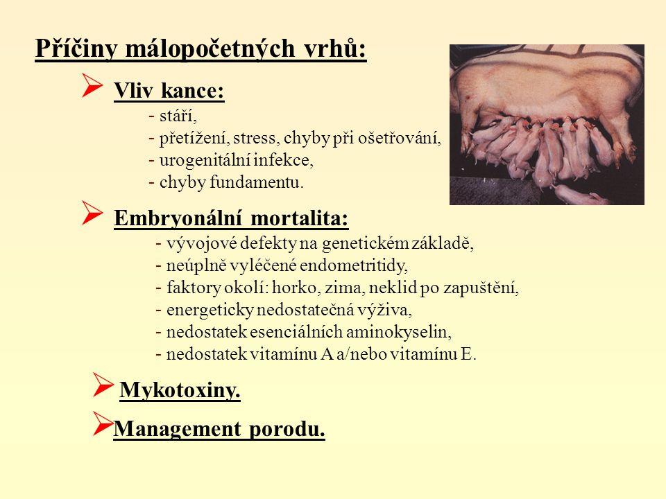 Nízké živé hmotnosti při narození se objevují při:  intrauterinním nedostatku energie a živin,  nedostatku vody (chybějící čistící efekt v močovém měchýři, cystitidy),  při nedostatečně léčených endometritidách (částečné defekty sliznice v děloze),  časné porody (nezralost plodů),  při chronických infekčních onemocněních (např.