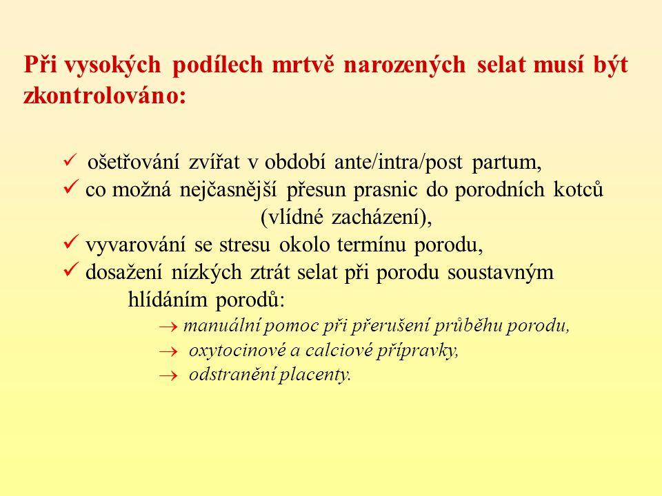 Při vysokých podílech mrtvě narozených selat musí být zkontrolováno:  ošetřování zvířat v období ante/intra/post partum,  co možná nejčasnější přesu