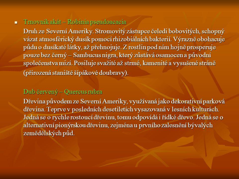  Trnovník akát – Robinia pseudoacacia Druh ze Severní Ameriky. Stromovitý zástupce čeledi bobovitých, schopný vázat atmosférický dusík pomocí rhizobi