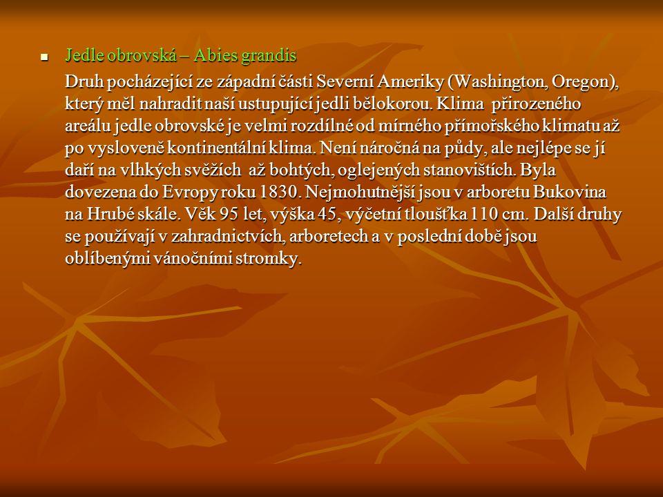  Jedle obrovská – Abies grandis Druh pocházející ze západní části Severní Ameriky (Washington, Oregon), který měl nahradit naší ustupující jedli bělo