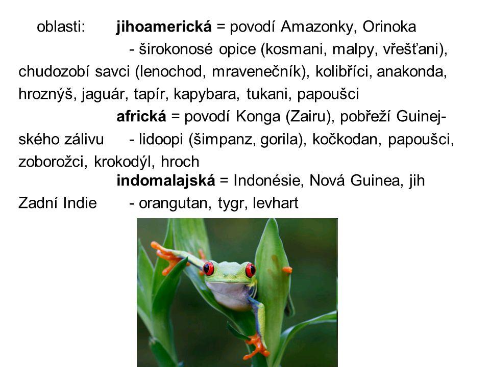 oblasti:jihoamerická = povodí Amazonky, Orinoka - širokonosé opice (kosmani, malpy, vřešťani), chudozobí savci (lenochod, mravenečník), kolibříci, ana