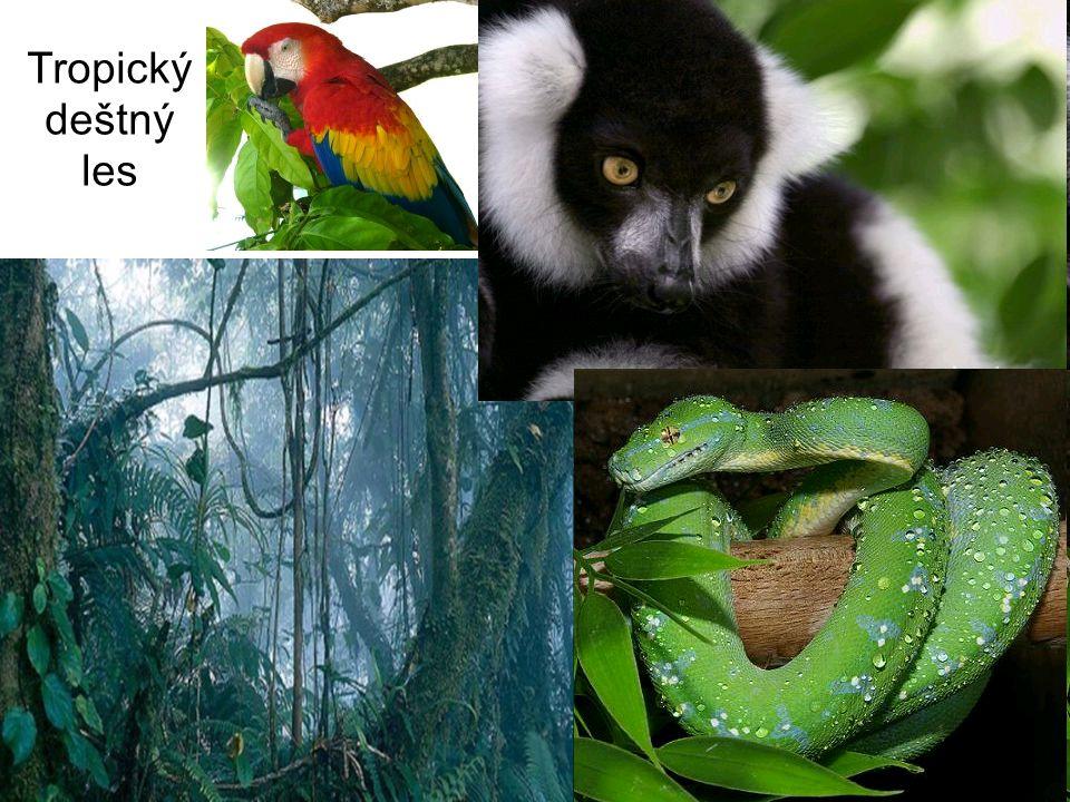 Tropický deštný les