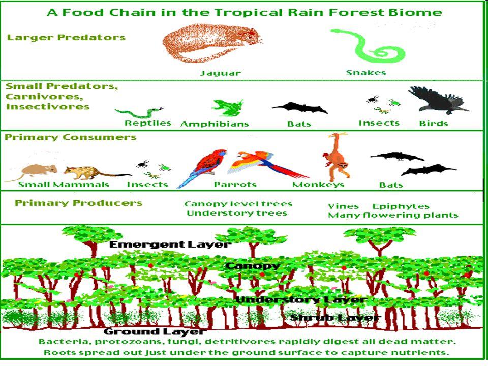 - střídavě vlhké = opadavé, listnaté období sucha (zima) = vegetační klid = opadavé, nižší, světlejší (dále od sebe), ubývá stromových pater, klesá pestrost rostlin- ných druhů rýže, tropické ovoce, čajovník, koření oblasti: monzunová Asie (Přední a Zadní Indie, jižní Čína) - bambus → džungle Střední, Jižní Amerika - méně výrazné (Afrika - prakticky zničeny lidmi - vypáleny, zemědělství)