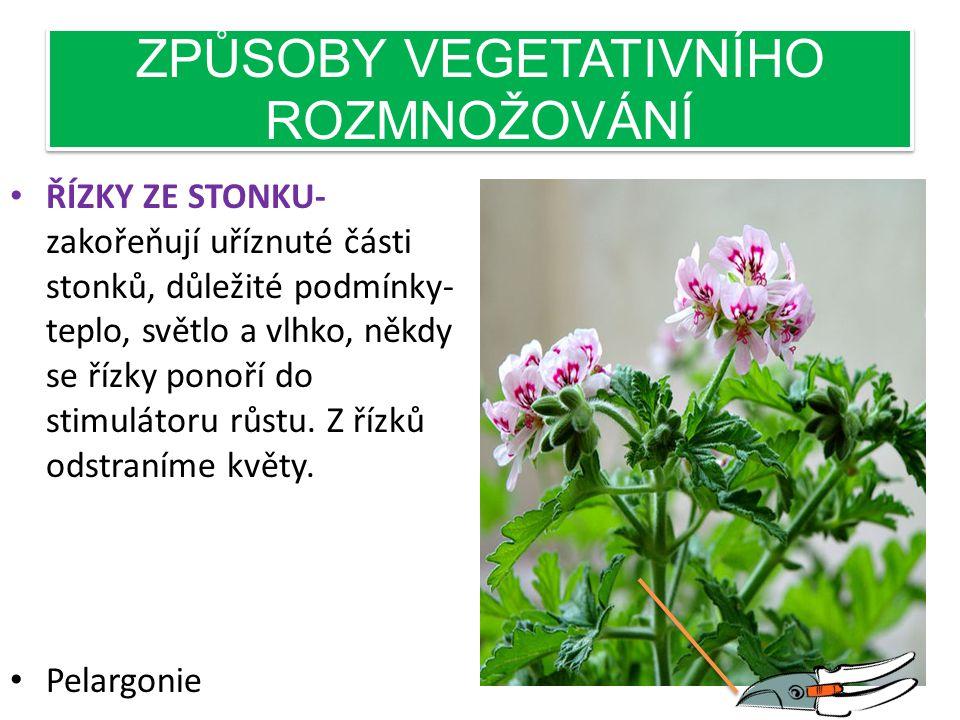 ZPŮSOBY VEGETATIVNÍHO ROZMNOŽOVÁNÍ • KOŘENOVÝMI PUPENY- z kořenových pupenů vyrůstají nové stonky rostlin a tvoří se pak husté porosty – maliník, ostr