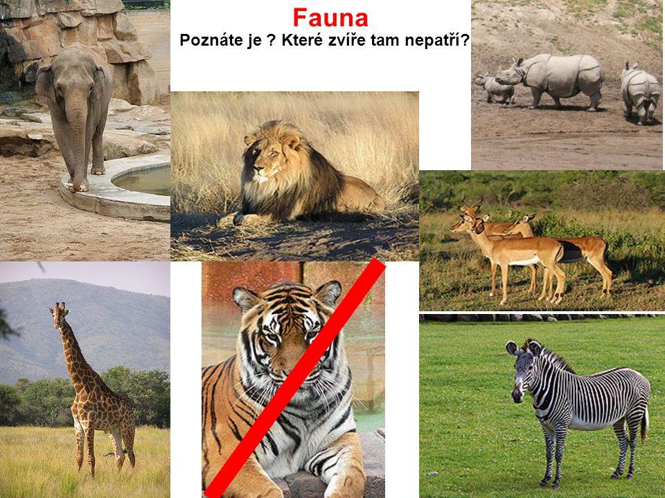 Fauna Poznáte je ? Které zvíře tam nepatří?