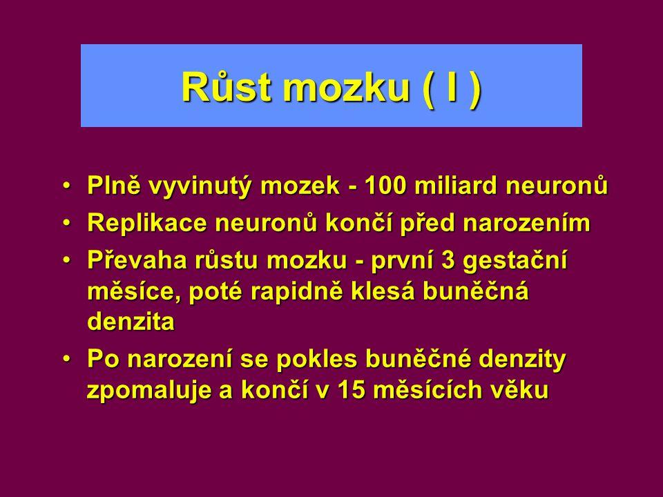 Růst mozku ( I ) •Plně vyvinutý mozek - 100 miliard neuronů •Replikace neuronů končí před narozením •Převaha růstu mozku - první 3 gestační měsíce, po