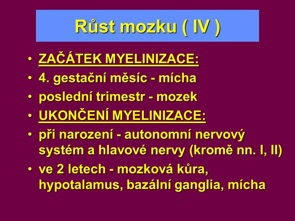 Růst mozku ( IV ) •ZAČÁTEK MYELINIZACE: •4. gestační měsíc - mícha •poslední trimestr - mozek •UKONČENÍ MYELINIZACE: •při narození - autonomní nervový