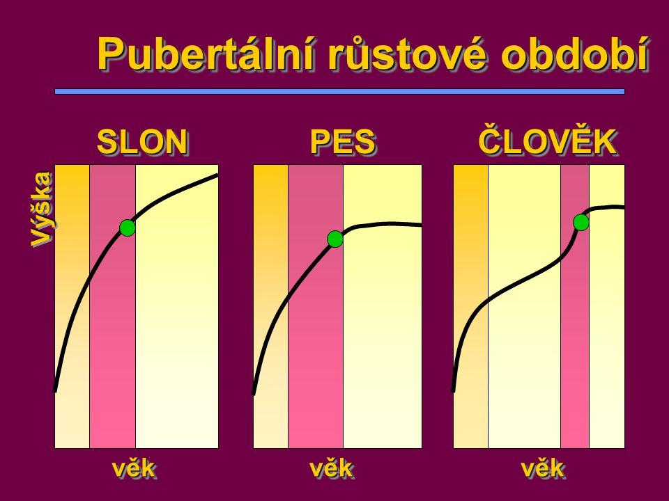Pubertální růstové období SLONSLONPESPESČLOVĚKČLOVĚK věkvěkvěkvěkvěkvěk VýškaVýška