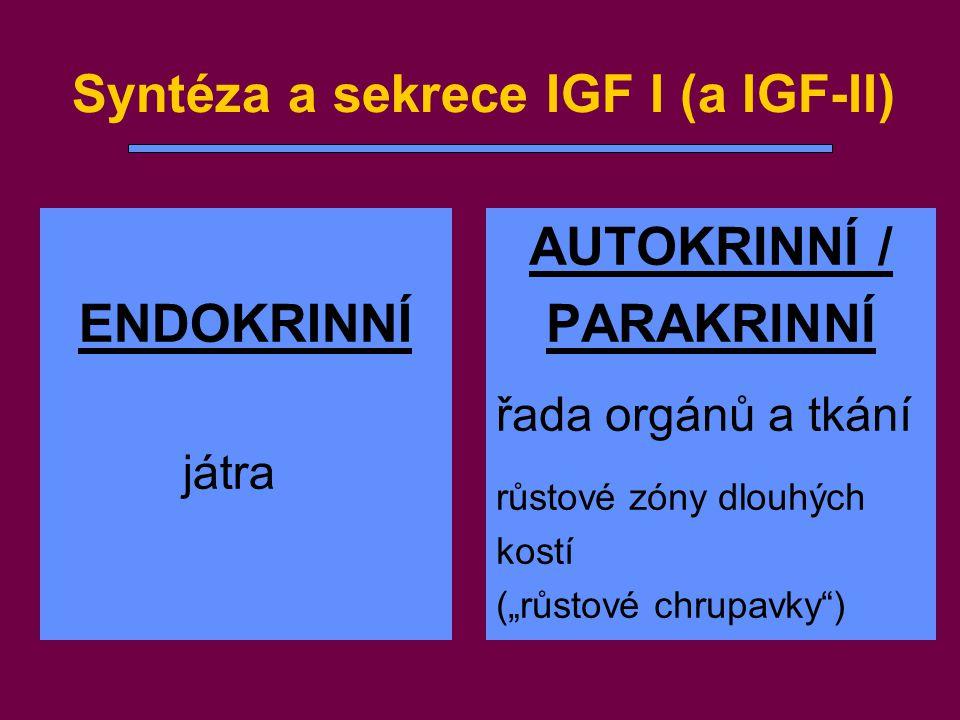 """Syntéza a sekrece IGF I (a IGF-II) ENDOKRINNÍ játra AUTOKRINNÍ / PARAKRINNÍ řada orgánů a tkání růstové zóny dlouhých kostí (""""růstové chrupavky"""")"""