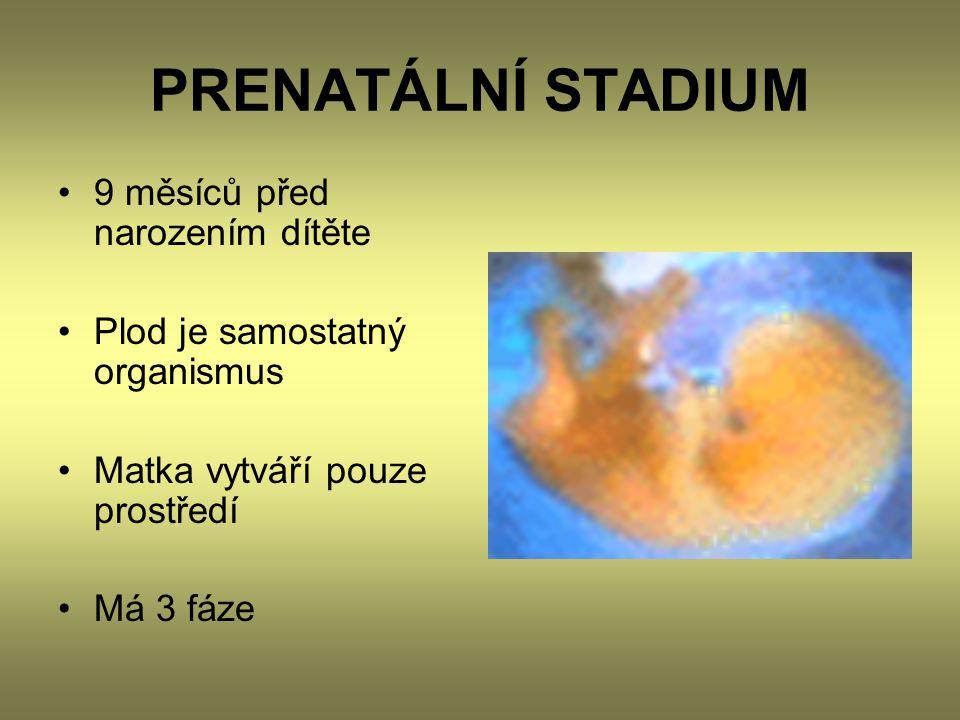 PRENATÁLNÍ STADIUM •9 měsíců před narozením dítěte •Plod je samostatný organismus •Matka vytváří pouze prostředí •Má 3 fáze